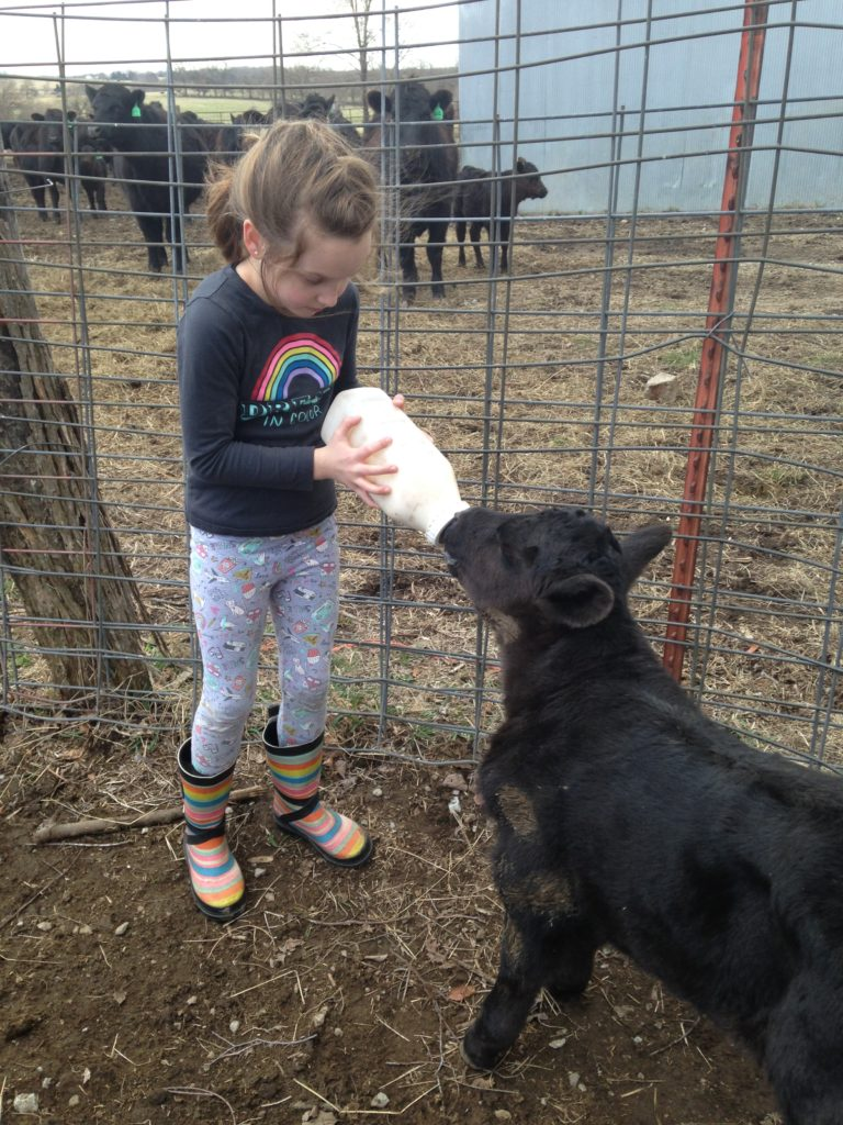 Audrey bottle feeding our lone twin calf spring '18.