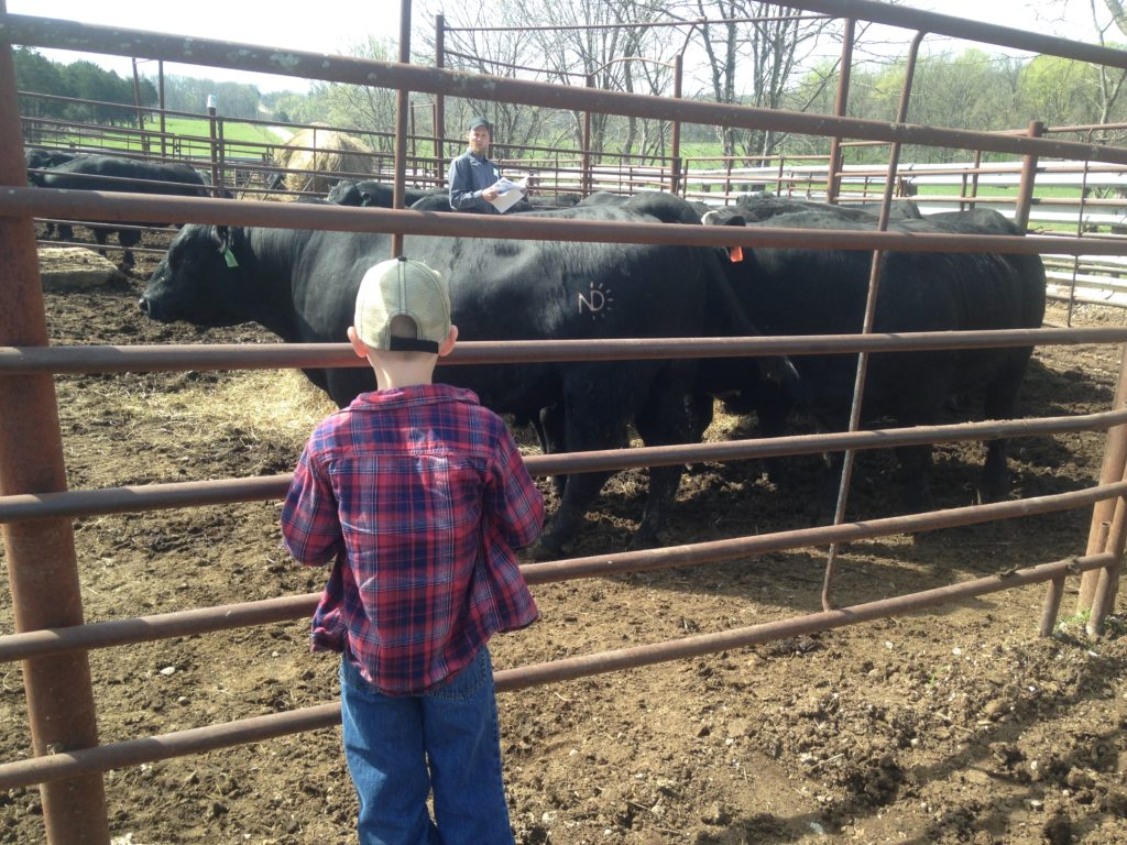 Matthew's first bull sale.  He helped me pick out a 4-way, homozygous black, homozygous polledcomposite (Angus, Red Angus, Simmental, and Gelbvieh).